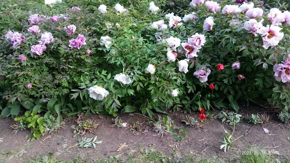 В одесском ботаническом саду вандалы уничтожили уникальные растения, - ФОТО, фото-1