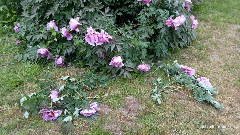 В одесском ботаническом саду вандалы уничтожили уникальные растения, - ФОТО, фото-3