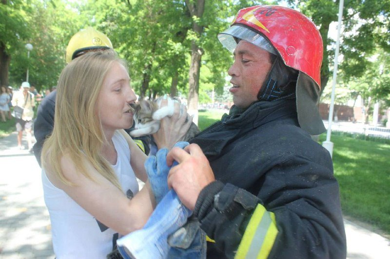 Попали в беду: в Одесской области спасатели снимали с дерева котят, - ФОТО, фото-2