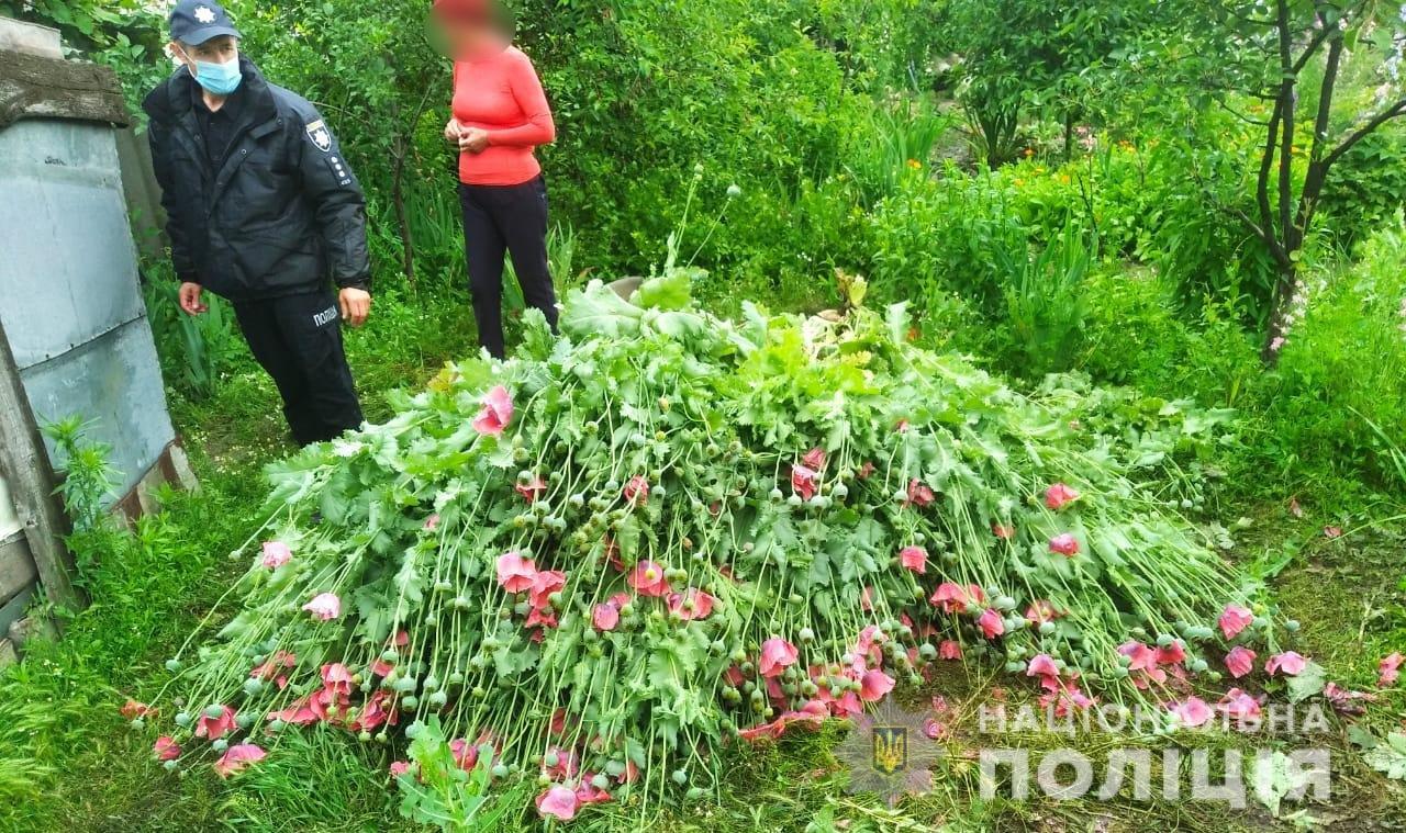В Одесской области пожилая женщина выращивала на своем огороде мак: за нее взялась полиция, - ФОТО, фото-1
