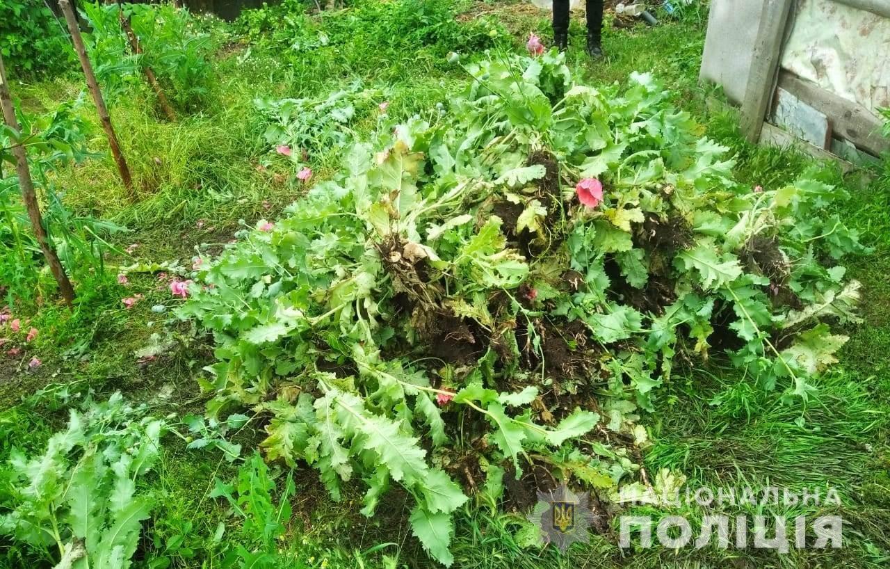 В Одесской области пожилая женщина выращивала на своем огороде мак: за нее взялась полиция, - ФОТО, фото-2