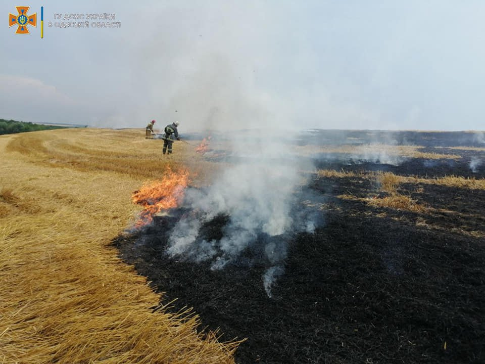 В Одесской области горели поля и свалка, - ФОТО, фото-1