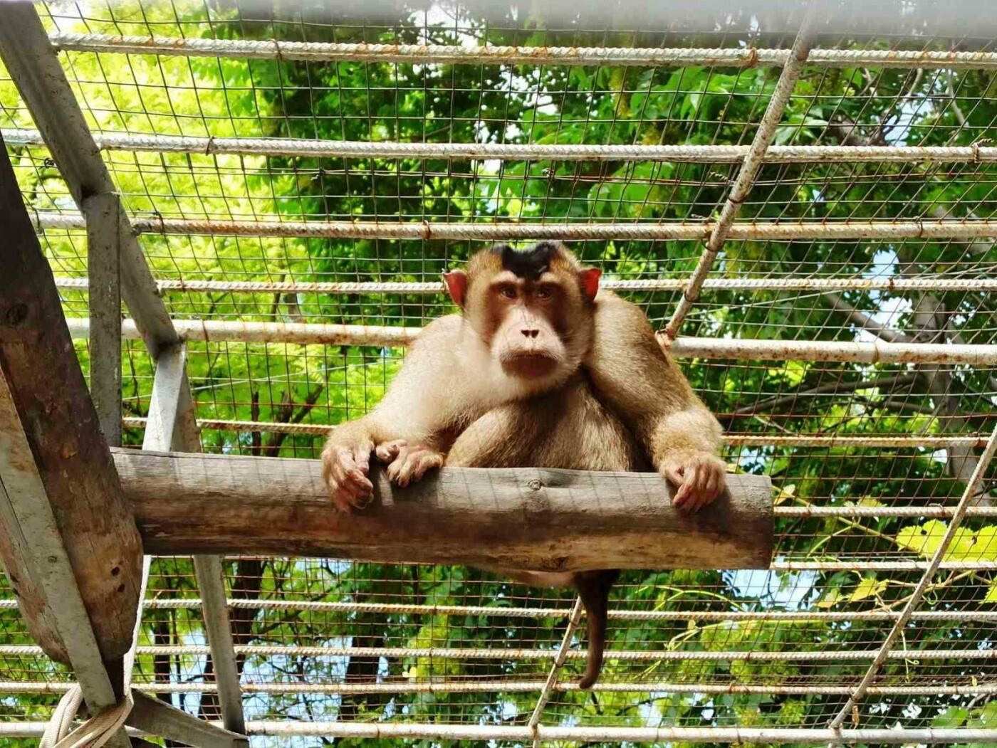 В одесском зоопарке появились новые обитатели, - ФОТО, фото-1
