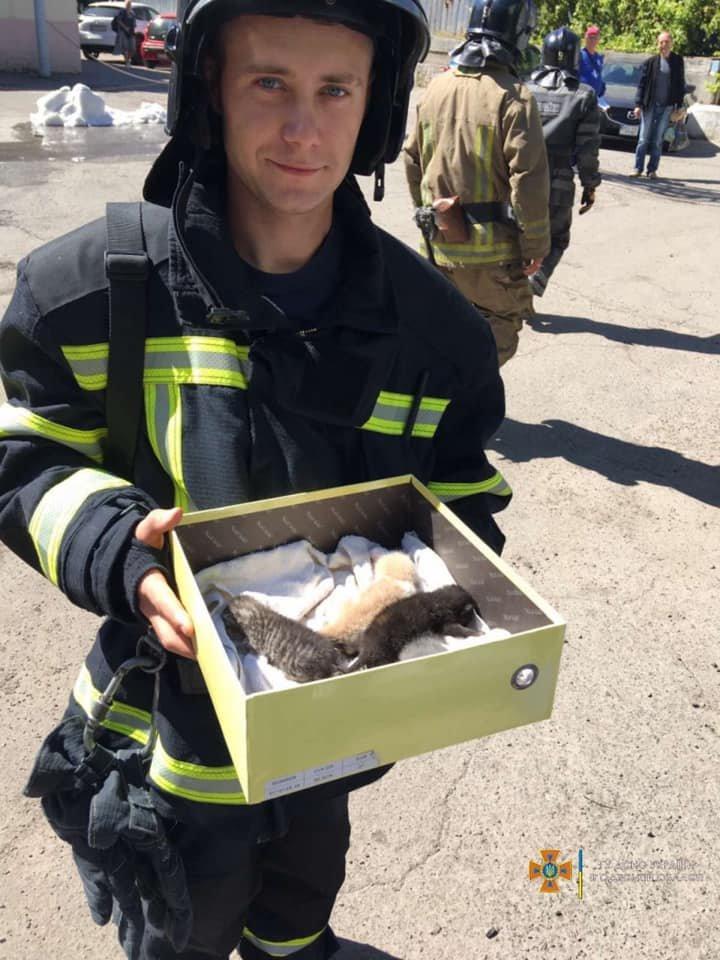 С крыши четырехэтажного здания в Одессе спасли новорожденных котят, - ФОТО, фото-2