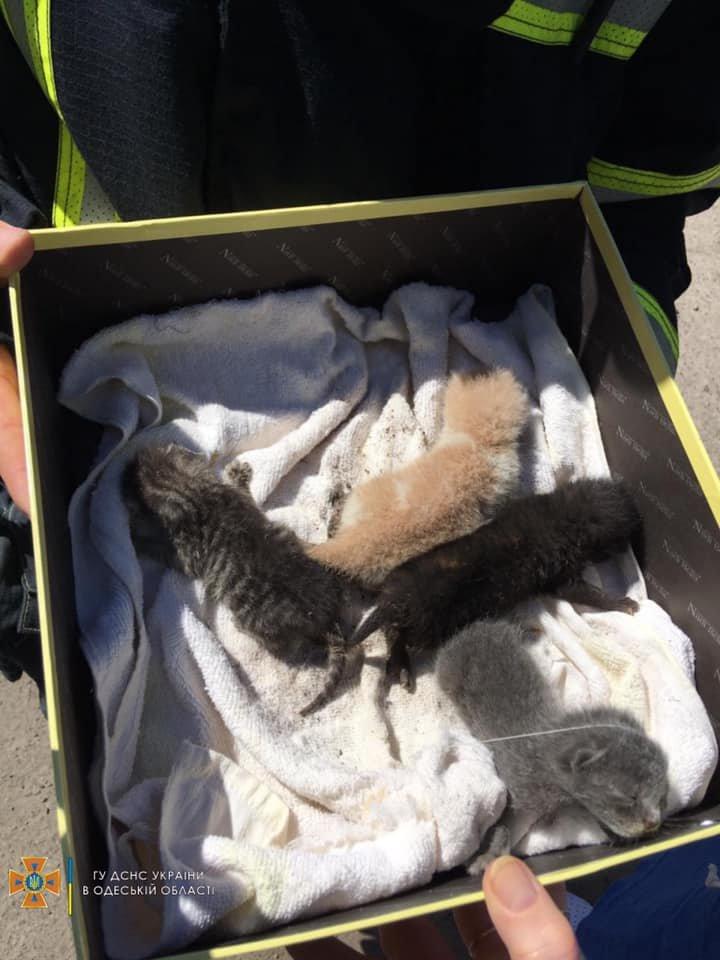 С крыши четырехэтажного здания в Одессе спасли новорожденных котят, - ФОТО, фото-1