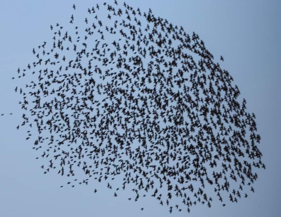В Одесской области размножаются опасные гусеницы, - ФОТО  , фото-1