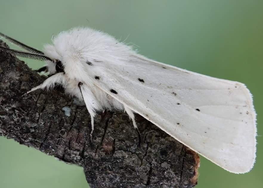 В Одесской области размножаются опасные гусеницы, - ФОТО  , фото-3