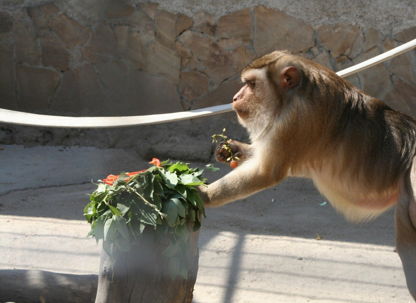 Одесскому зоопарку исполнилось 99 лет, как отмечали это событие горожане, - ФОТОРЕПОРТАЖ , фото-6