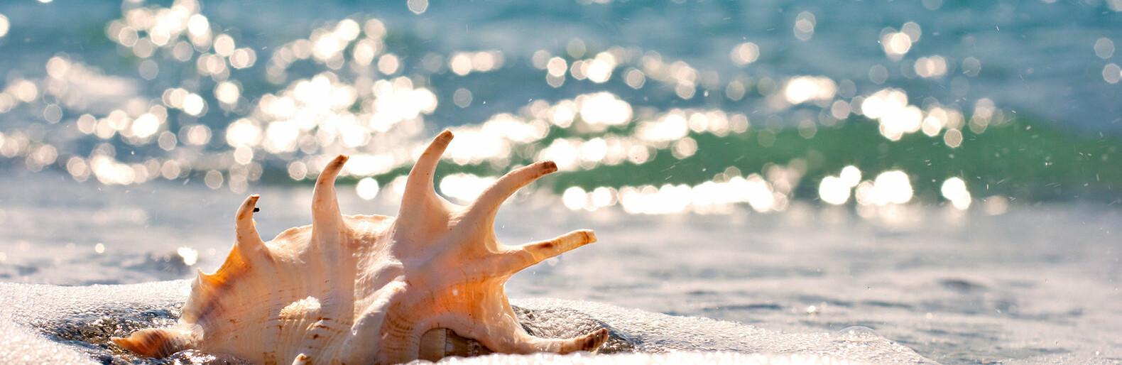На Одессу движутся субтропики: погода и температура морской воды сегодня0