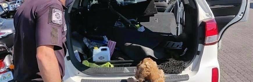 Одесские пограничники нашли патроны в авто из США, - ФОТО0