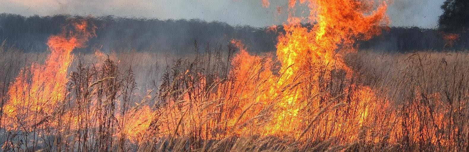 За сутки в Одесской области сгорело 18 га травы и кустарника0