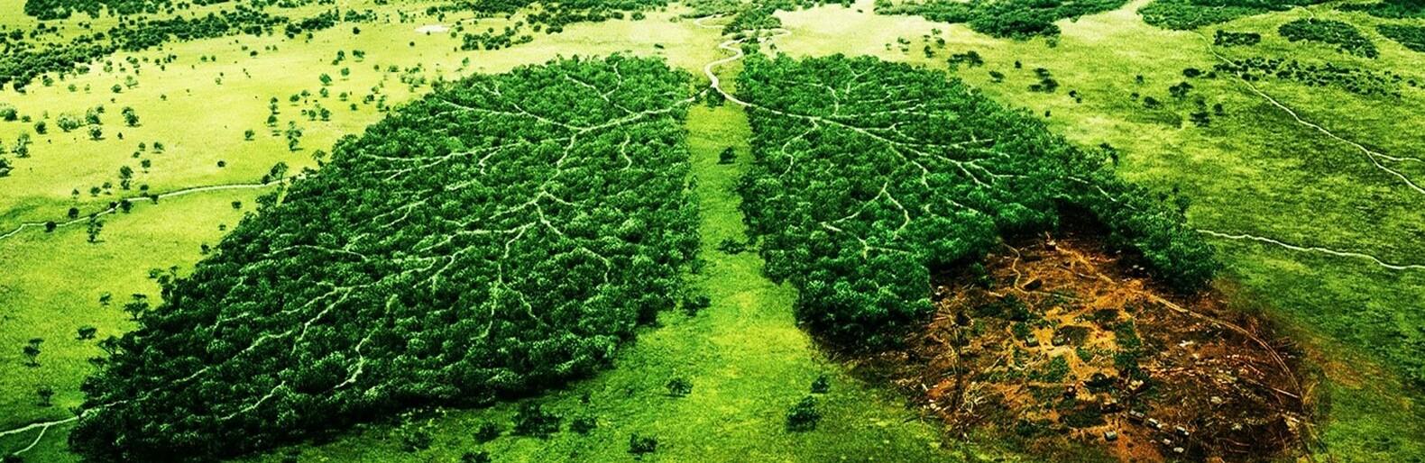Незаконная вырубка леса: в Одесской области задержали черных лесорубов, - ФОТО, Жирносенко Александр