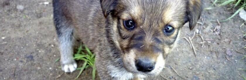В Одесской области из подвала спасли щенков, - ФОТО0