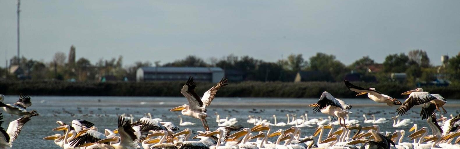 В Одесском зоопарке спасают пеликана, - ФОТО0