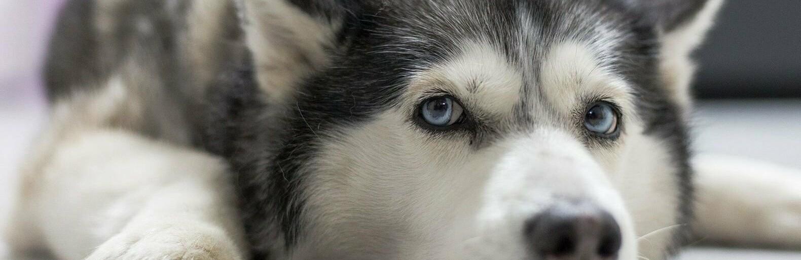 В Одесской области мужчина жестоко избил собаку, - ФОТО0