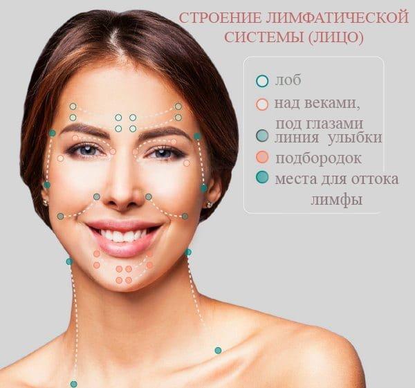 строение лимфатической системы на лице и шее